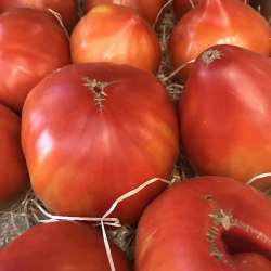 Tomate Hector (500g ou 1kg)