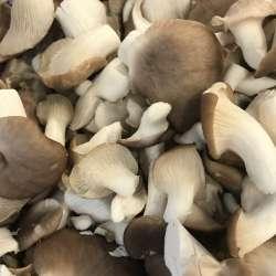 Pleurotes  gris (LES 100 GR)