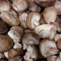 Champignons Shii-také (LES 100 GR)