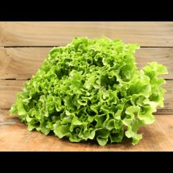 Salade de saison (LA PIECE)